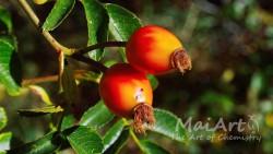 Aromat owoc goji