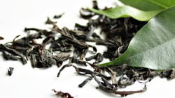 Premix zielona herbata