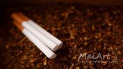 Aromat mai tobacco