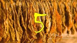 Aromat black tobacco 5