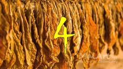 Aromat black tobacco 4