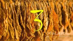 Aromat black tobacco 3