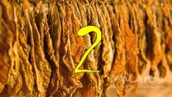 Aromat black tobacco 2