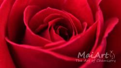 Aromat róża