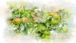 Aromat jabłko z miętą