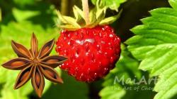 Aromat wild strawberry punch