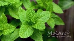 Aromat sweet mint